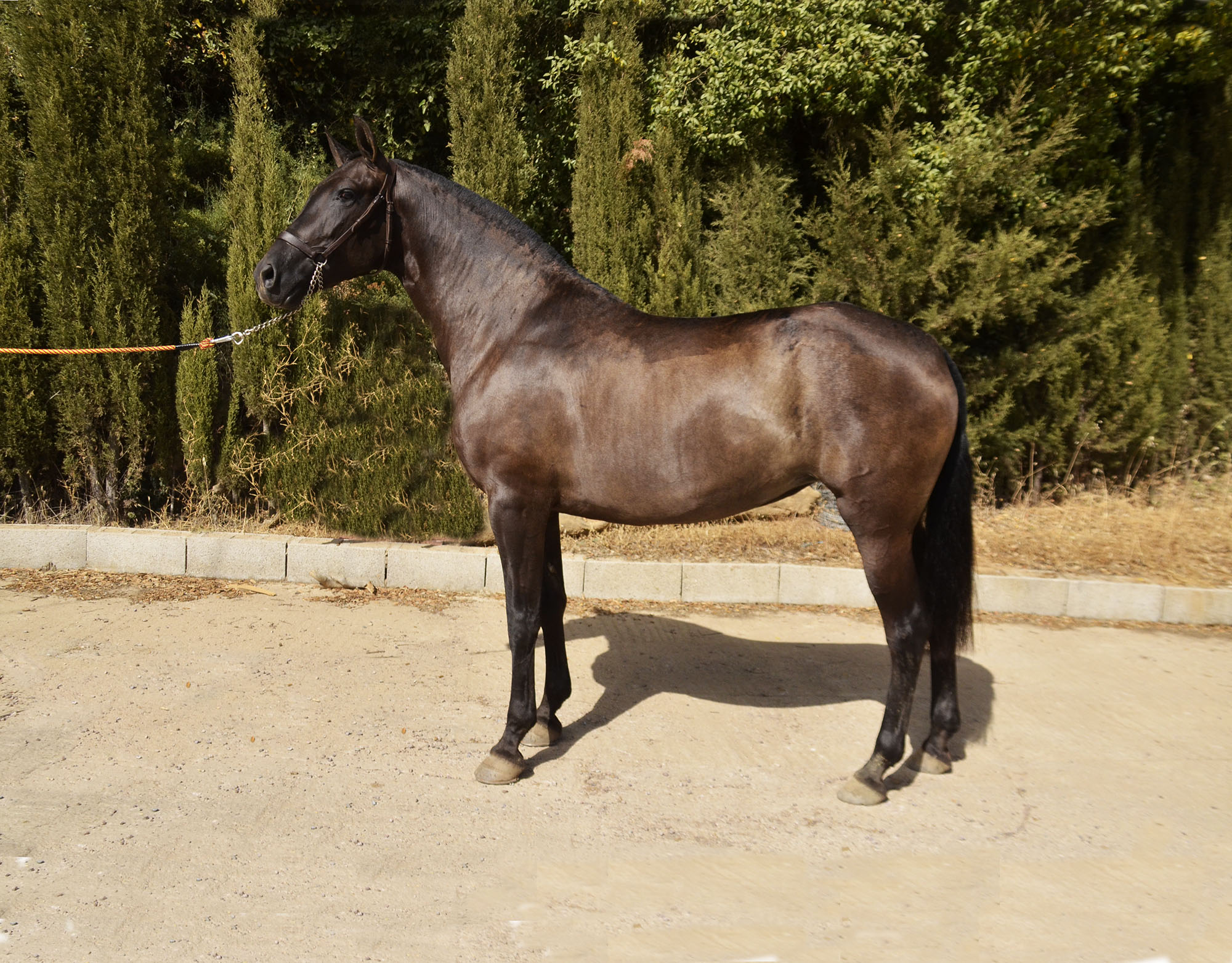 List of Mares