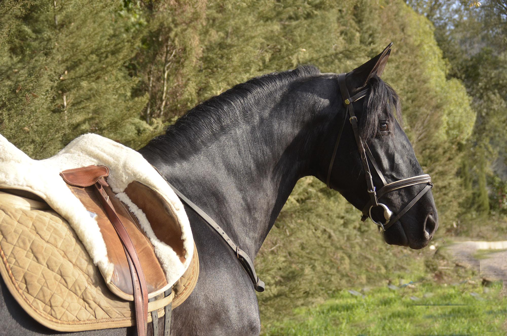 List of Stallions